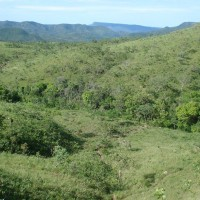 There is grassland (some natural and some due to human activities) interspersed with thick vegetation.