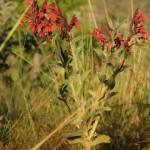 native plants have no trouble staying vibrant!